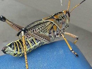Pest Control Jacksonville FL
