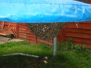 bouncing bees