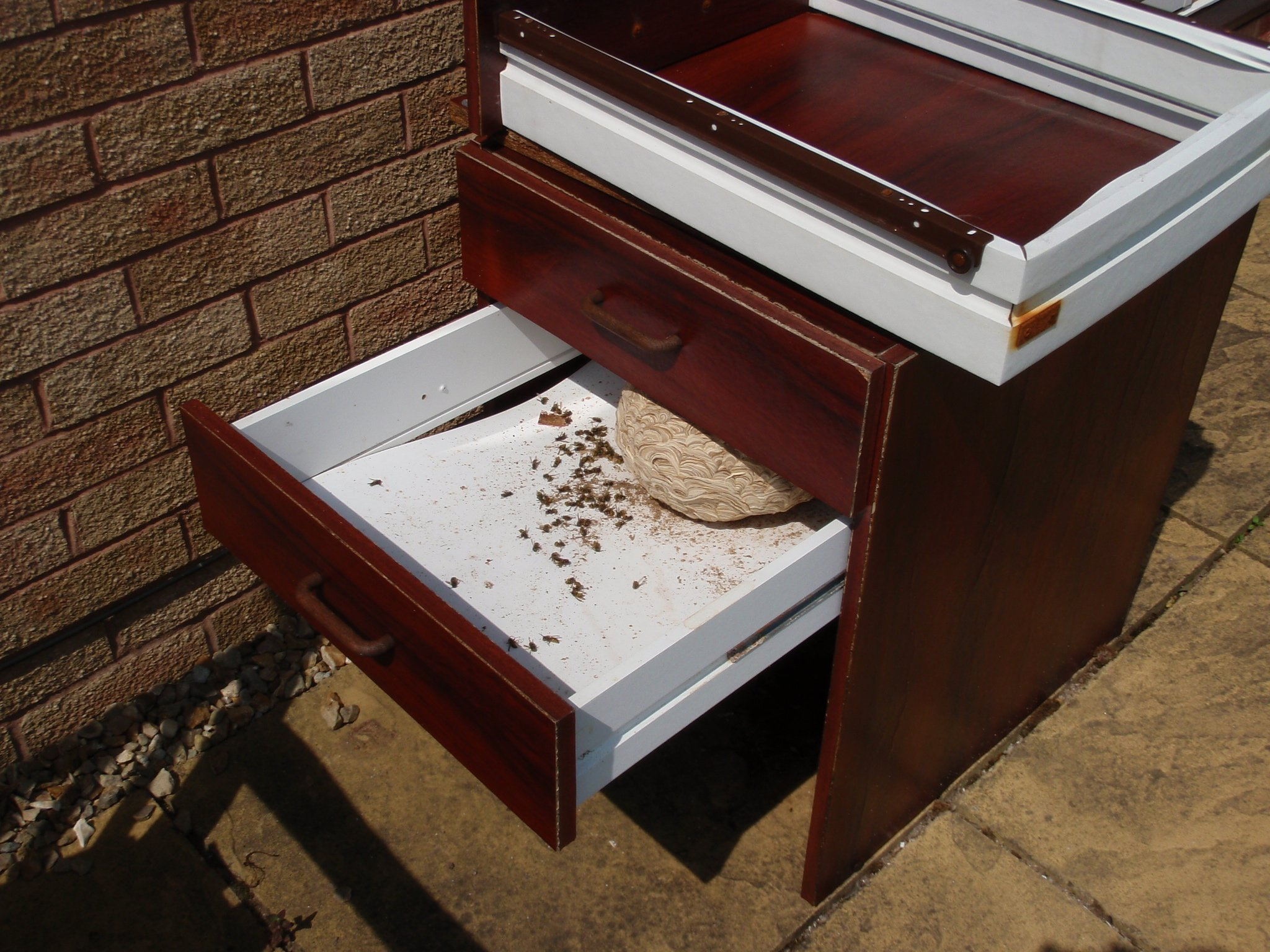 insects in wooden box