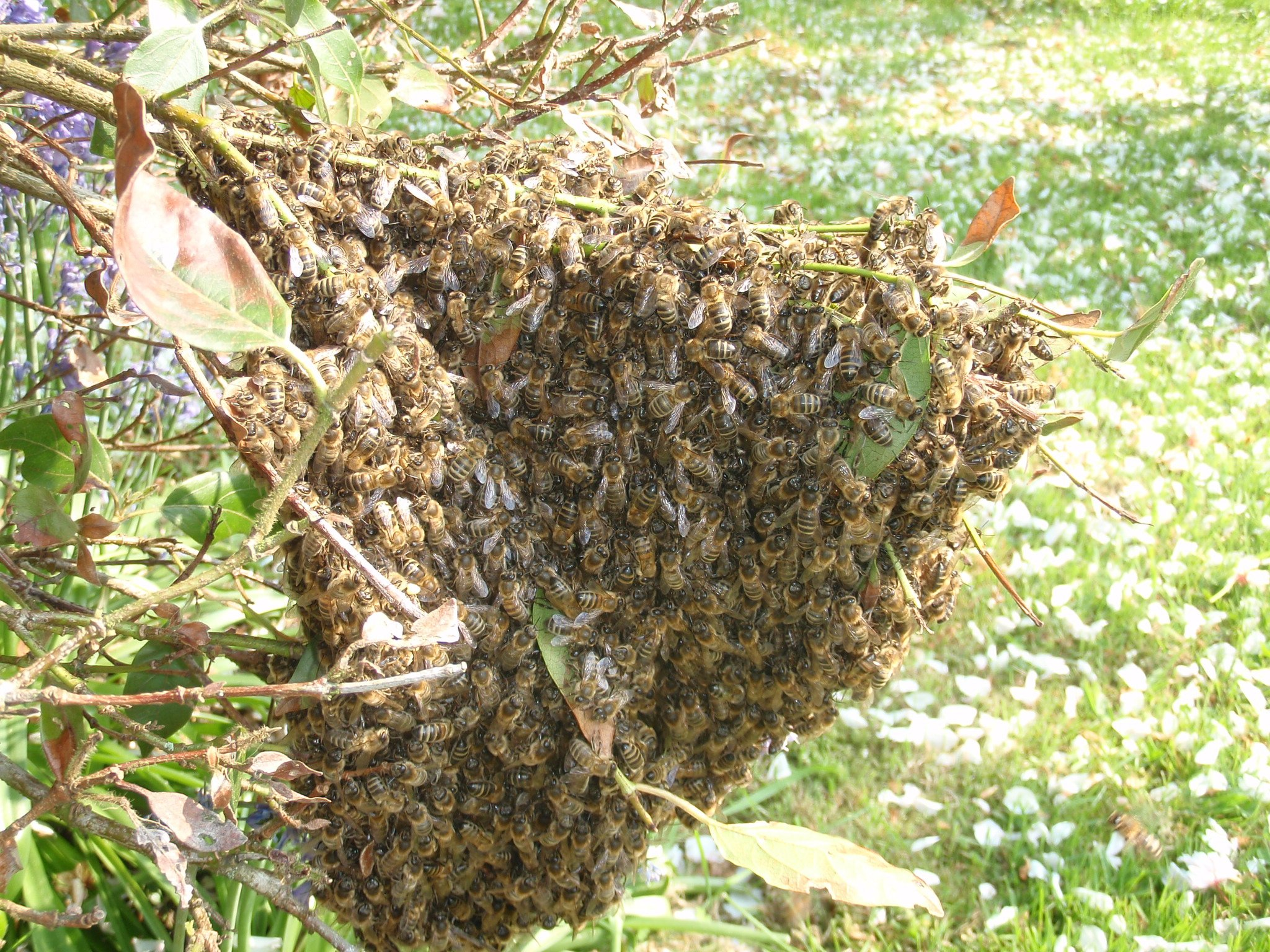 swarm of insects