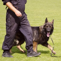 qualified dog trainers