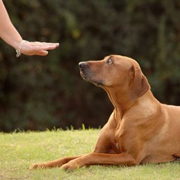 one-to-one dog training session