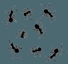 disinfestazione piante e terreni