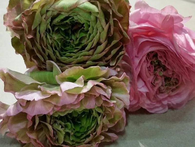 piante ornamentali valdobbiadene