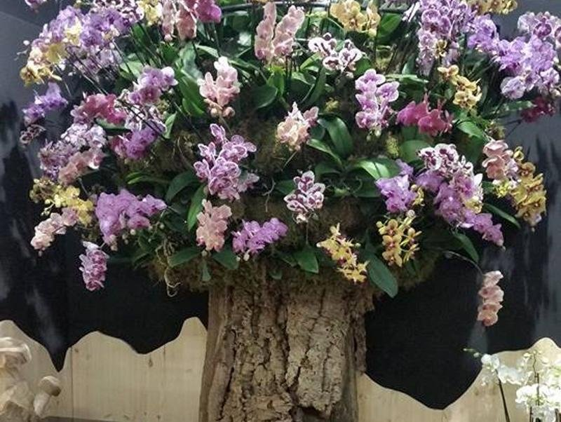 vendita piante valdobbiadene