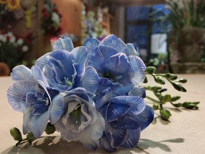 piante ornamentali feltre