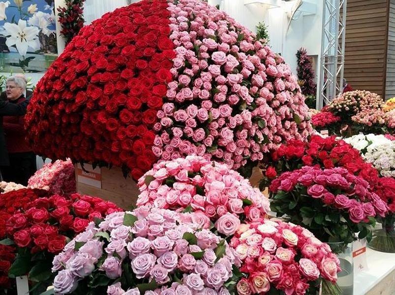 vendita fiori quero vas
