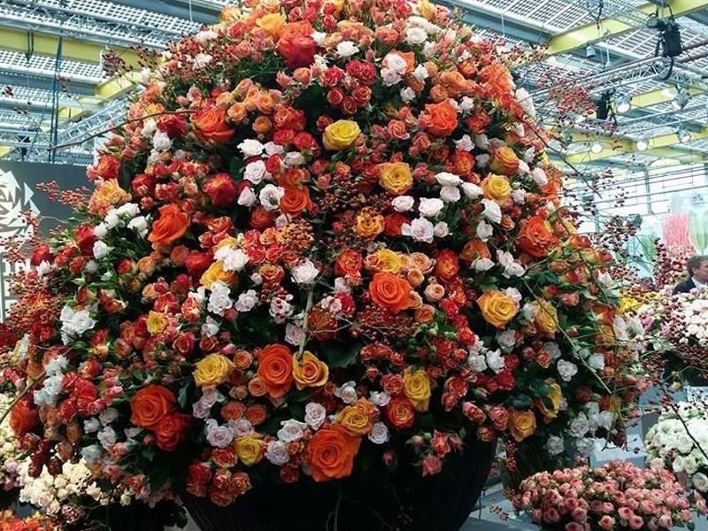 vendita fiori freschi belluno