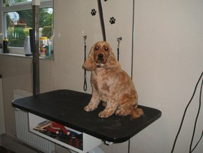 Contact a cut above dog grooming service for A cut above grooming salon