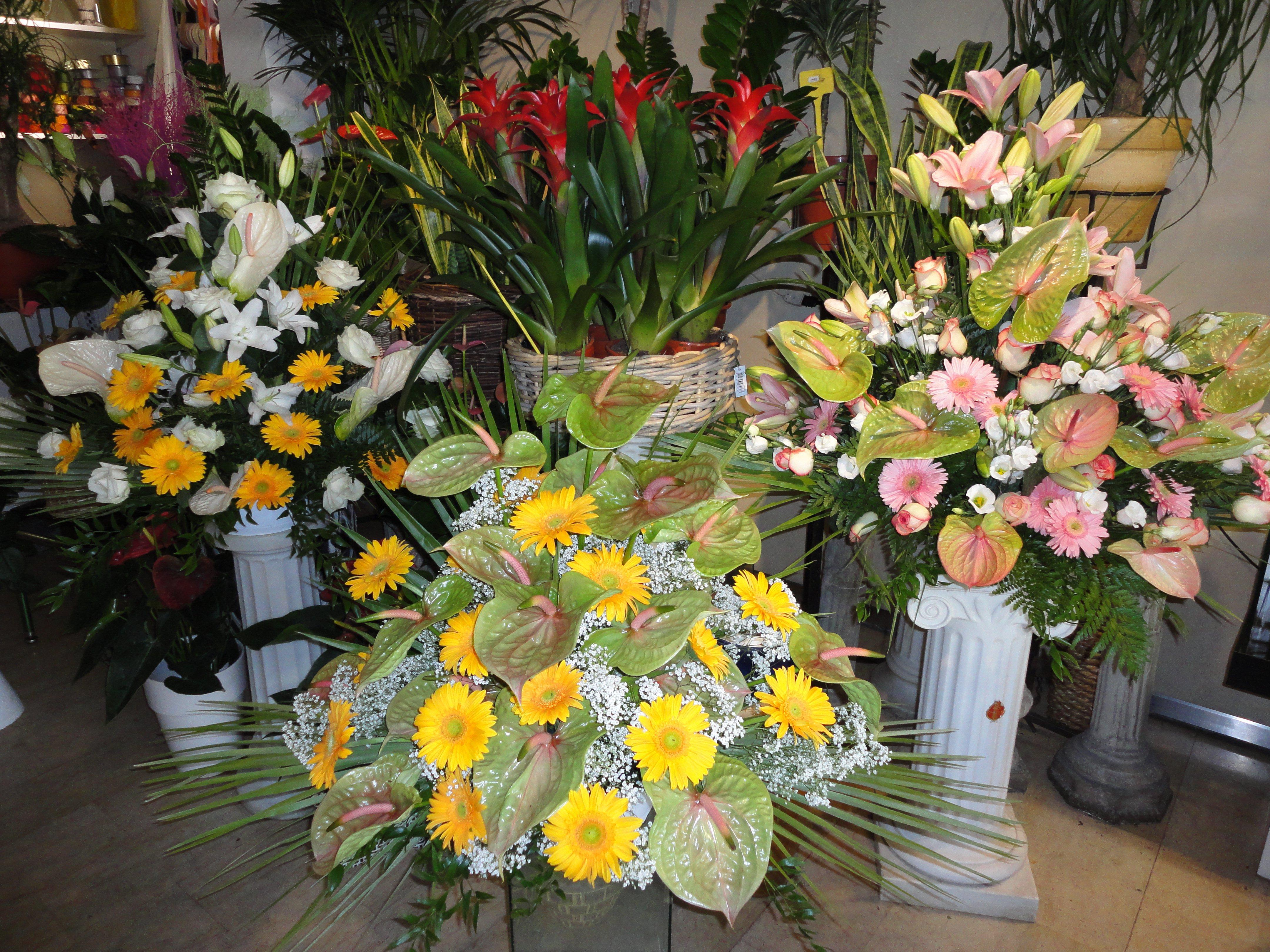 assortimento fiori per composizioni