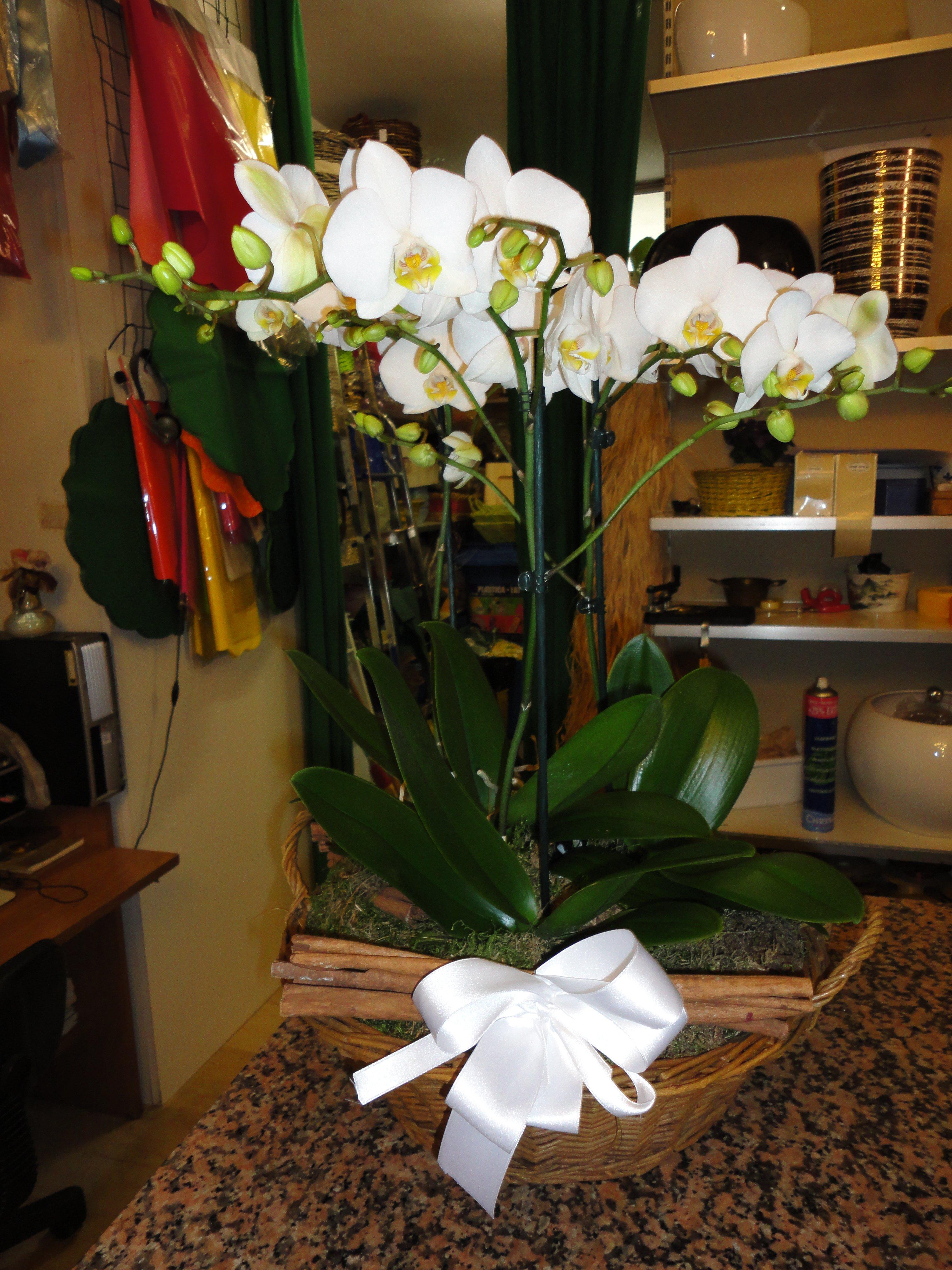 composizione orchidee bianche