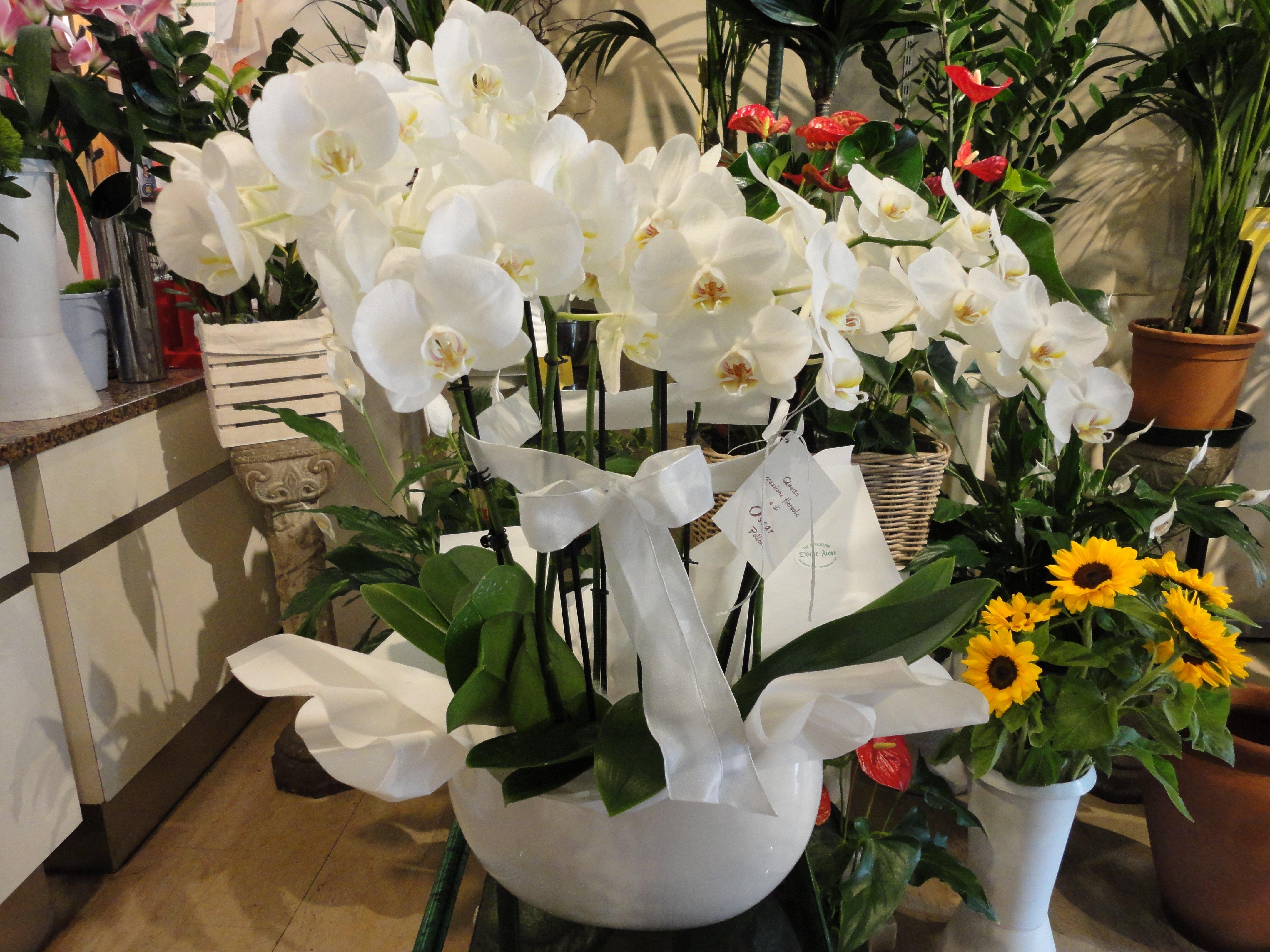 fiori con fiocco bianco