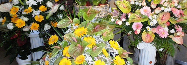 Fiori in vendita alla Fioreria Oscar - Interflora