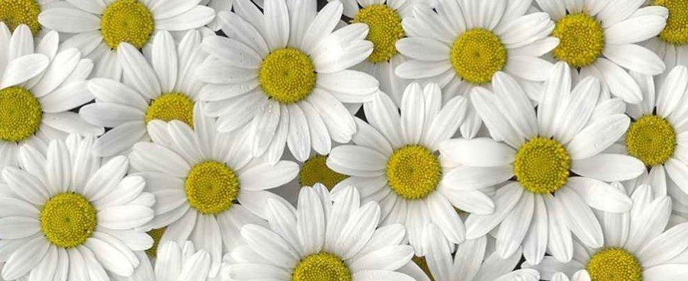 Design floreale