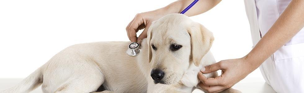 Visita veterinaria cani