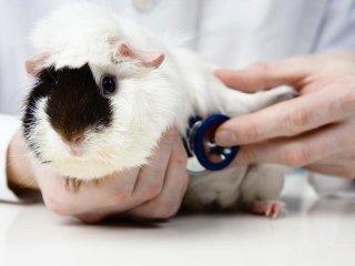 Clinica per animali Montelupo Fiorentino