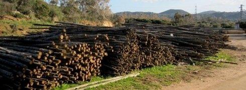 Cumuli di legname non lavorato