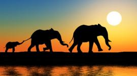 agenzia viaggi safari