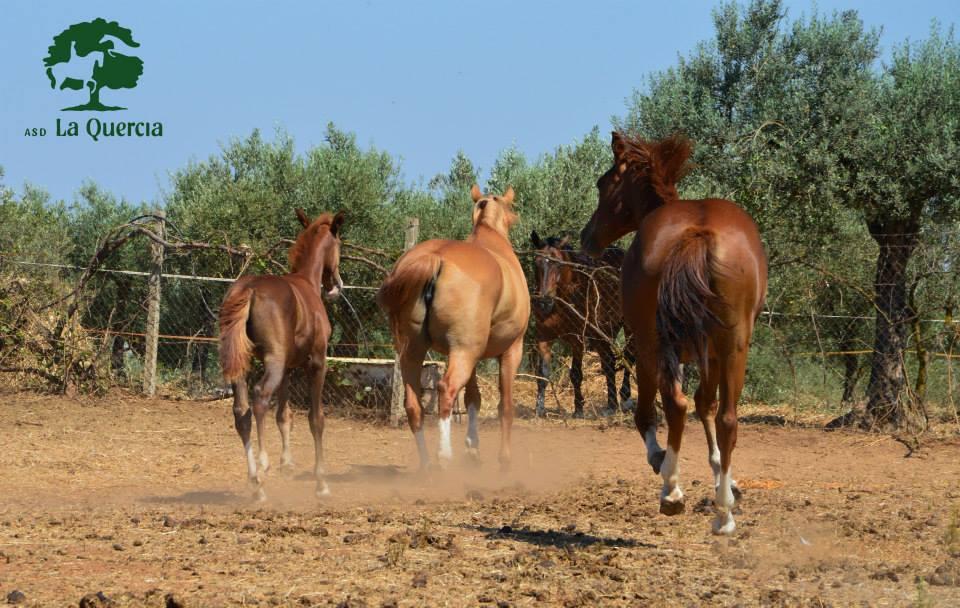 cavalli che corrono visti da dietro
