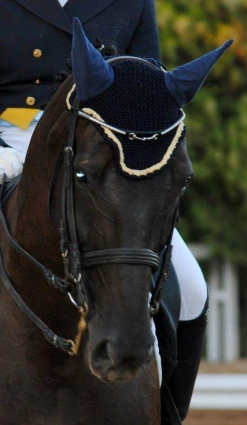 un cavallo durante una gara