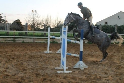 cavallo che salta un ostacolo