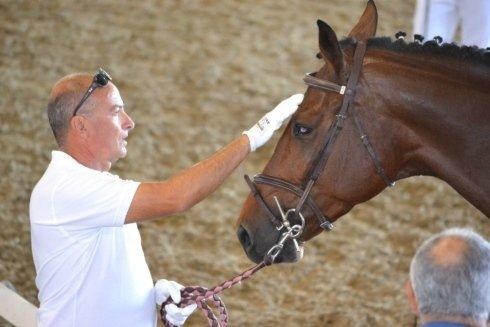 un addetto del maneggio che accarezza un cavallo