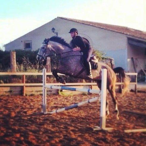 Cavallo che salta un ostacolo nel maneggio