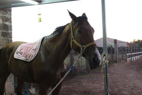 Primo piano di un cavallo
