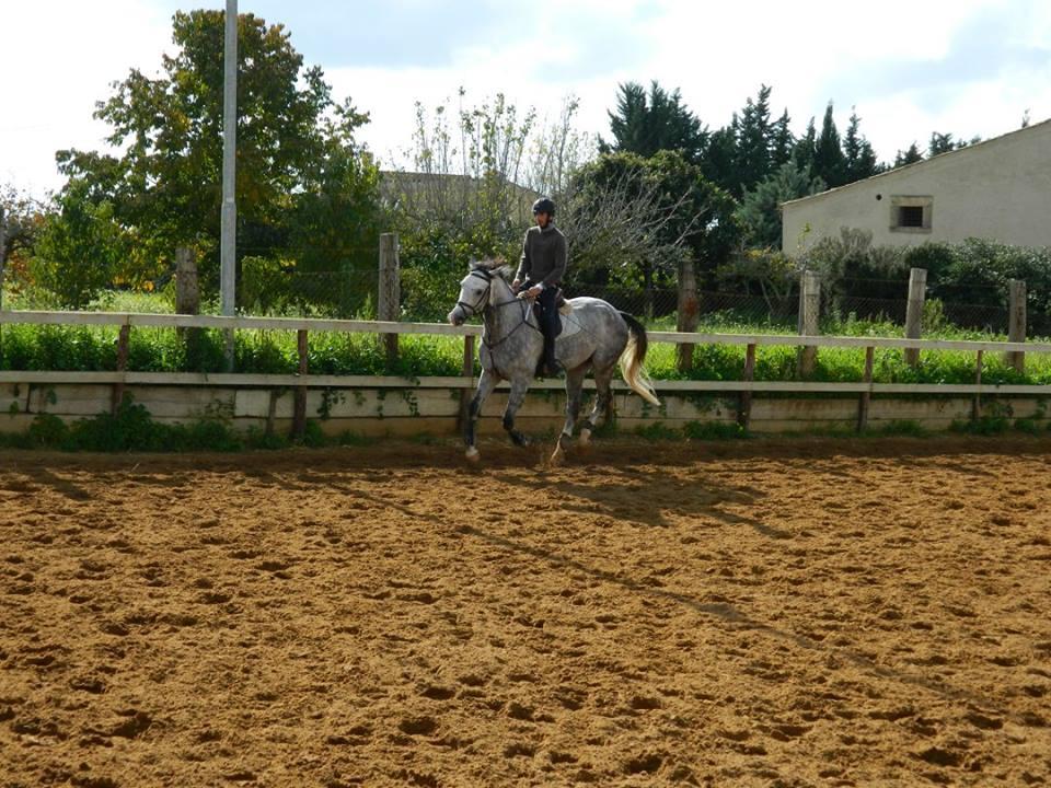 fantino su un cavallo che corre nel maneggio