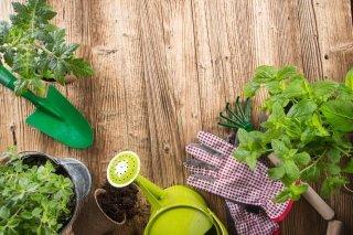 dei vasi con delle piante e degli attrezzi da giardinaggio