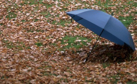 fall leaves, tree removal, debris removal, storm damage restoration, arkansas weather