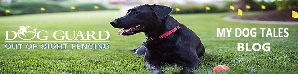 Dog Guard Blog