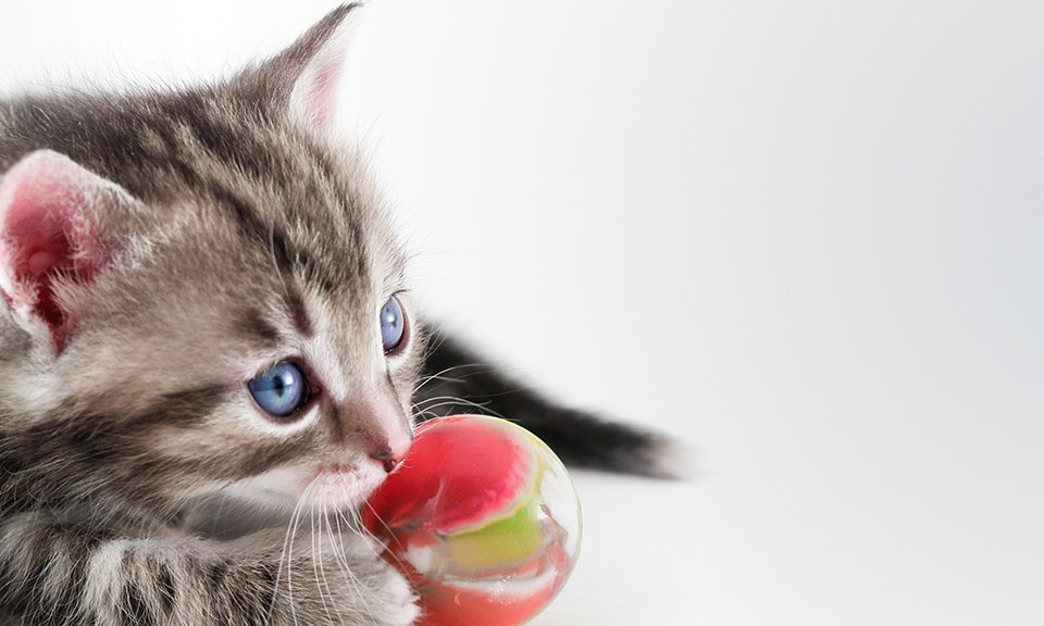 Cat with a ball