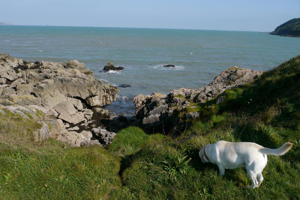 view of the sea