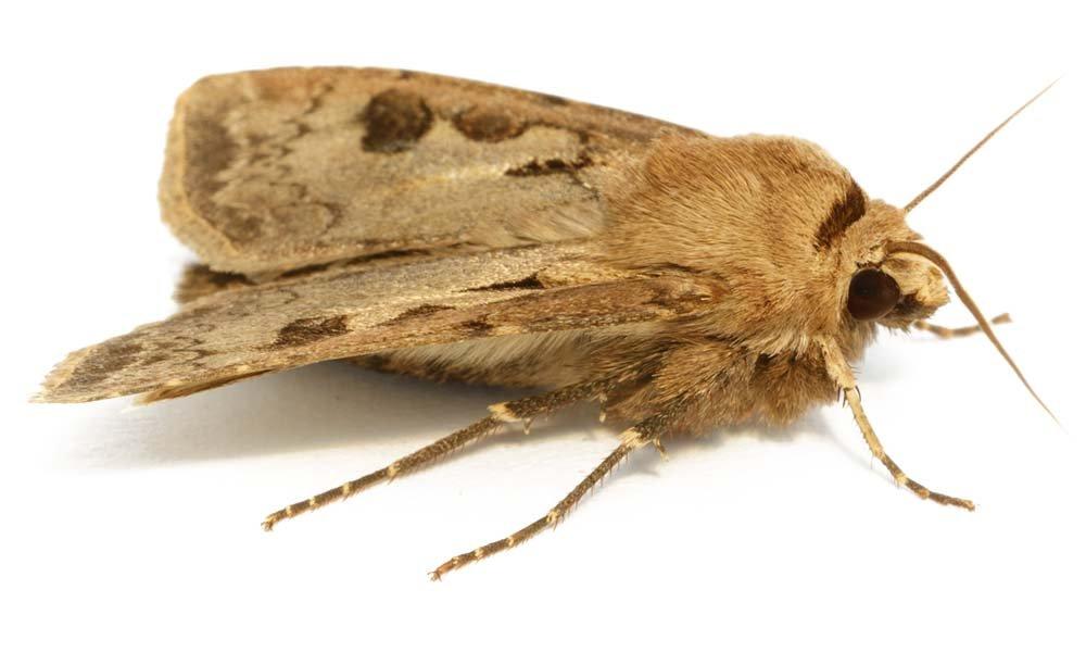 Moths In Kitchen Cupboards Uk