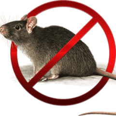 trattamenti insetticidi