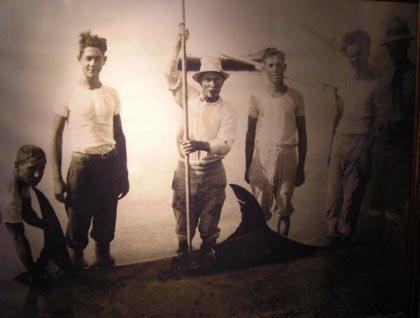 Una foto in bianco e nero di alcuni uomini che hanno arpionato un pesce