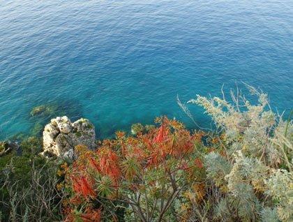 Degli alberi con delle foglie rosse e vista dell'acqua cristallina del mare con gli scogli