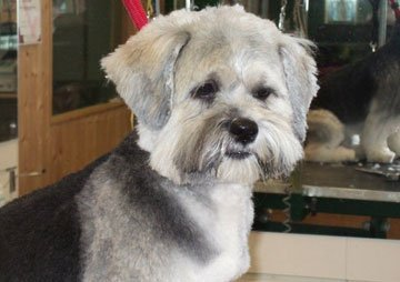 Dog grooming - Stoke-on-Trent, Staffordshire - Barkers - Dog