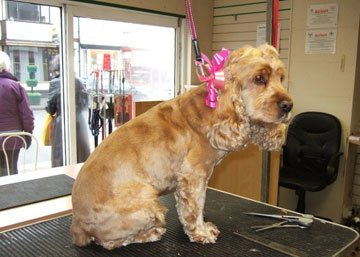 Dog groomers - Stoke-on-Trent, Staffordshire - Barkers - Dog Grooming