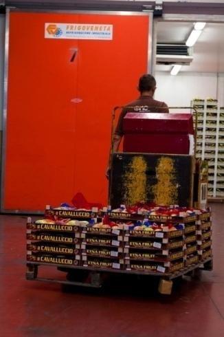 Kisten mit Zitrusfrüchten