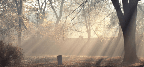 funeral-directors-feature-image