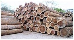 lavorazione trochi legno