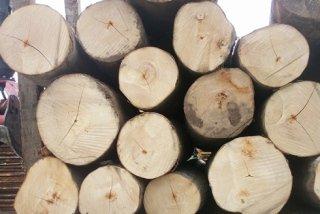 lavorazione legname edile
