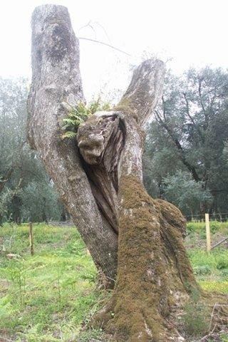 produzione legname