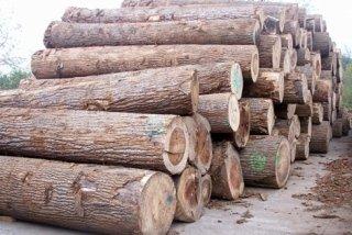 lavorazione legname