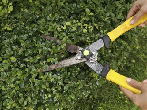 taglio siepe giardino