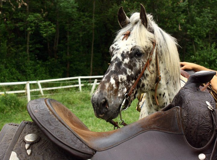 un cavallo bianco e nero