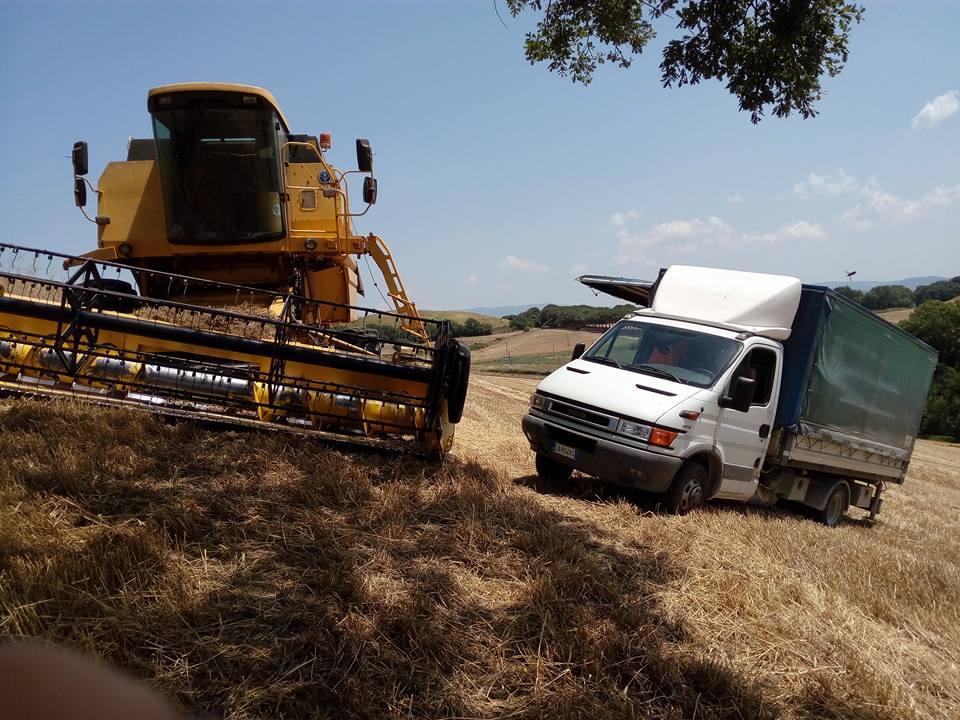 una mietitrebbia in un campo, un albero e accanto un camion con il vano rimorchio aperto