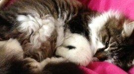 sala visita gatti, degenza gatti, chirurgia veterinaria